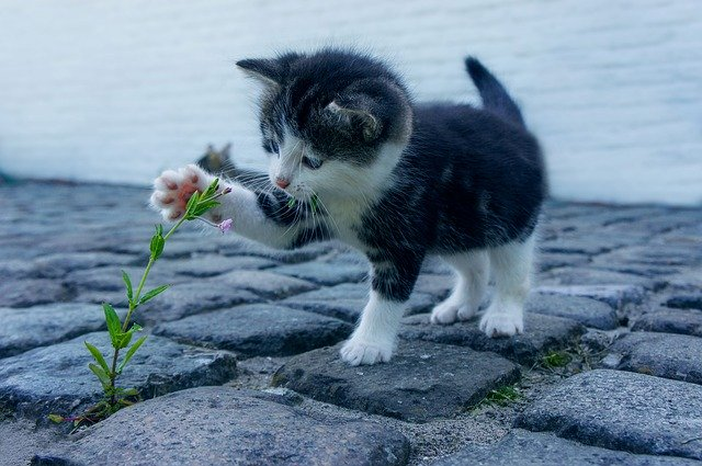 Keeping Your Cat Healthy